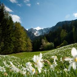 Frühling_9
